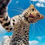 gopro-leopardo