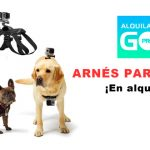 arnes-perro-gopro