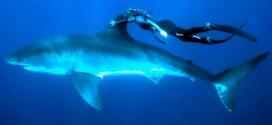 GoPRO: lo más cerca posible de una tiburón